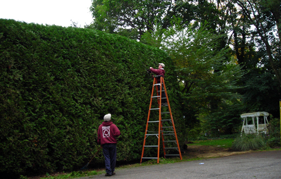 Shrubbery and hedge pruning
